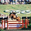 Calvaro Euro Stallions Img01